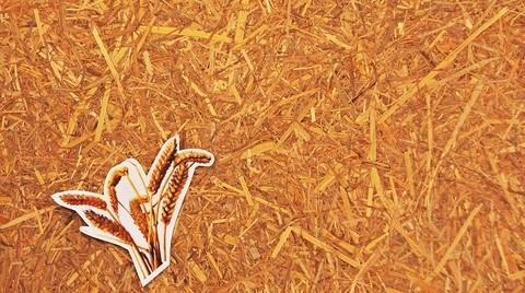 Kokoboard'dan Fıstık Kabuğu İçerikli Biyo-Kompozit Levhalar
