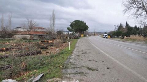 Ağaçlar yol kurbanı oldu!