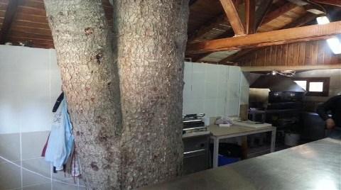 Proje Değiştirildi, Ağaç Mutfakta Kaldı!