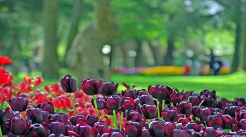 İstanbul'da Çiçeklere 313 Milyon TL Harcandı