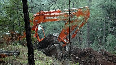 Ümraniye'de Orman Katliamı!