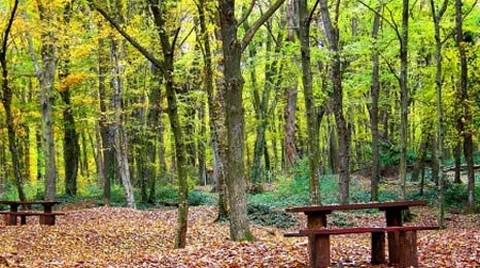 Belgrad Ormanları'na Rezidans Dikilecek!
