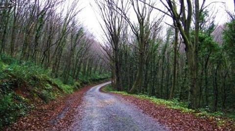 Ormandan 13 Bin Ağaç Kesildi