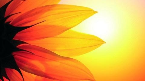 Marshall Bal Peteği: Sarının En Moda Tonu