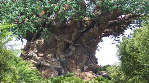 EXPO için Anıt Ağaçlar Sökülecek!