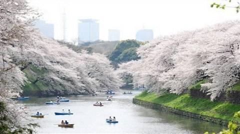 Ueno Park-Tokyo (Japonya)