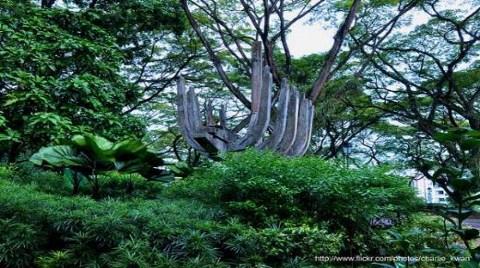 Fort Canning Park-Singapur