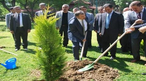 İşte Erdoğan'ın O Ağaçları