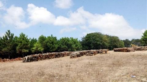 Göletler Kurutuluyor, Ağaçlar Kesiliyor!