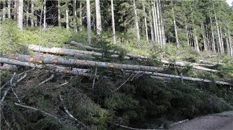 Yüzlerce Ağacı Kesip Ormanda Yol Açtılar