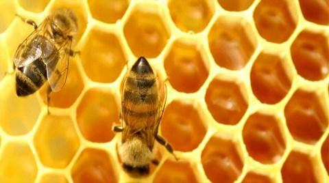 """""""O Kadar Örgütlüsünüz ki, Arıları Bile Eğitmişsiniz"""""""
