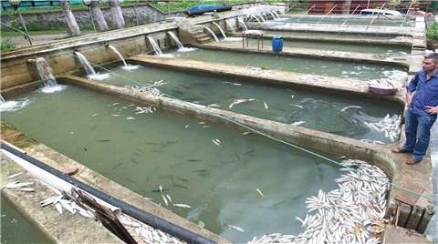 Milli Parkta Dereye Karışan Çimento Balıkları Vurdu!