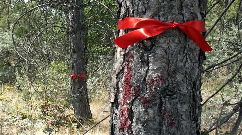 ODTÜ'den Söktüğü Ağaçları Kuruttu!