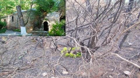 Kutsal Dağ 7 Yılda Küllerinden Doğdu