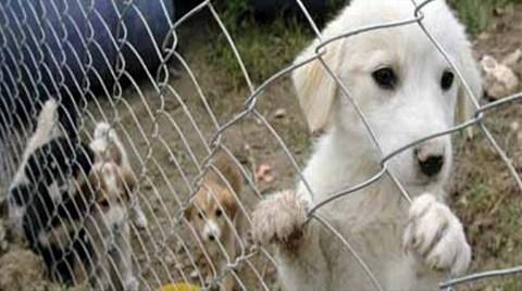 Kadıköy Hayvan Barınağı Finans Merkezi Olacak