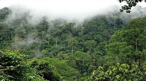 Amazon Ormanları Küçülüyor