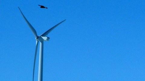Rüzgar Enerjisi Şirketine 'Doğal Yaşam' Cezası