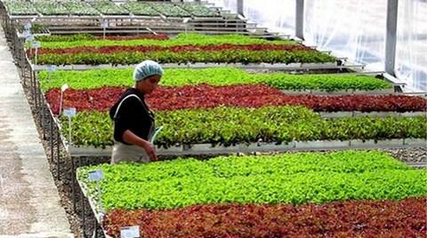 Süs Bitkileri Pazarı Hedef Büyüttü