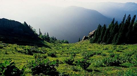 Kaz Dağları'nda Sevindiren Karar