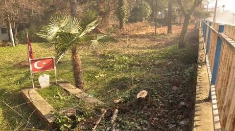 Yol için Ağaç Katliamı
