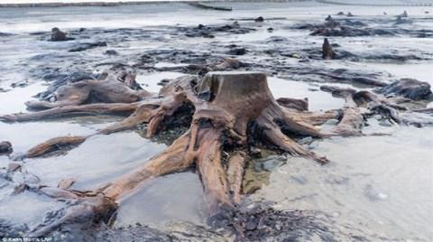Denizin Altından 5 Bin Yıllık Orman Çıktı!