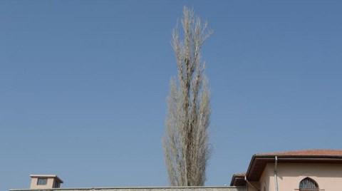 Bu Ağaç İdamlara Tanıklık Etti!