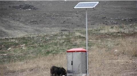 Sokak Hayvanları Güneş Enerjili Otomatlarla Beslenecek
