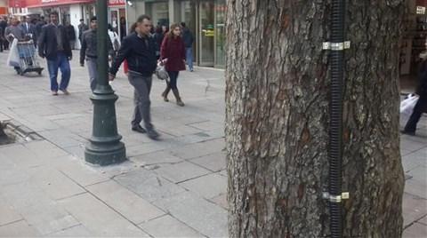Yükleniciye Ceza Ağaçlara Özgürlük