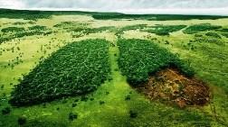 """""""Orman Varlığının Artırılması için Ülkece Çalışmalara Hız Verilmeli"""""""