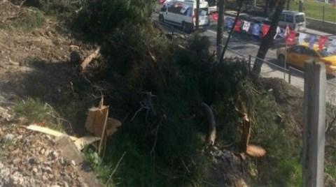 Florya'da Ağaç Katliamı