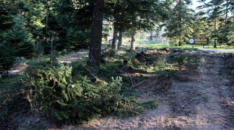 Tabiat Parkı'nda Yol Açmak için Ağaç Kıyımı!