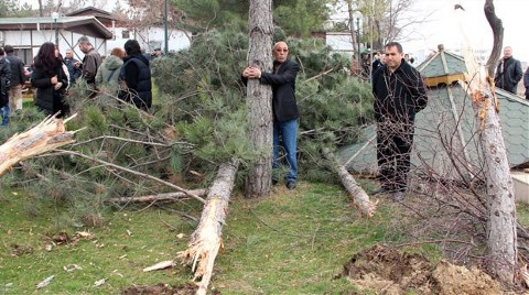 Ağaç Katliamına Suç Duyurusu