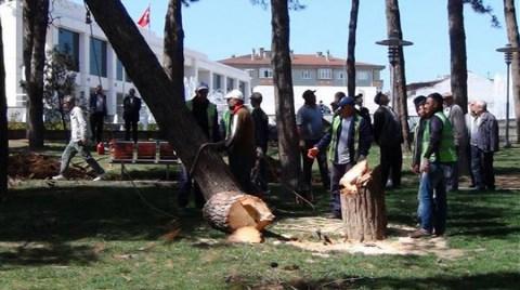 Belediyeden 'Usulsüz' Ağaç Kesimi