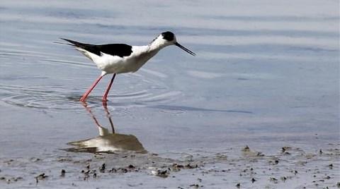 Hafik Gölü'ne 'Taşıma Suyu'yla Kuraklık Önlemi