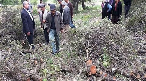 Köylüler Ormanı Orman Müdürlüğü'nden Koruyor