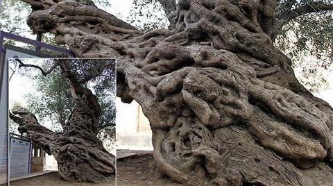 Bu Ağaca Dokunan Yanar