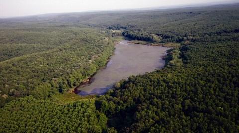 Avrupa'nın En Büyük Longoz Ormanına Kömürlü Santral Tehditi!