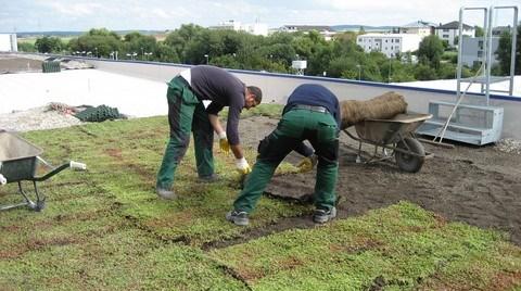 Küresel Isınmaya Karşı 'Bitkilendirilmiş Çatı'