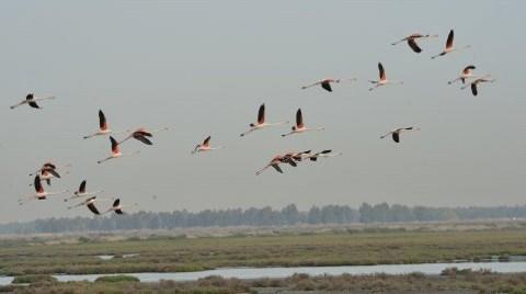 Arıtma Suyu Kuş Cennetine Can Verecek