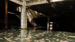 Terkedilen AVM'yi Balıklar Bastı!