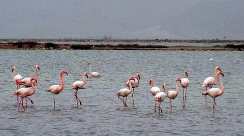 Flamingolara Bakanlık Güvencesi