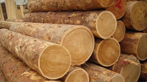 Ağaç ve Orman Ürünleri İhracatı 2 Milyar Doları Aştı