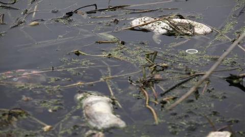 Su Kirliliği Mide Bulandırıyor