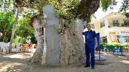 Anıt Ağaçlara Özel Dolgular