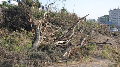 İstanbul'da Ağaç Katliamı