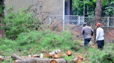 Adana'da Ağaç Kesimine Tepki