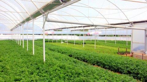 İstanbul'un Tarım Arazisi de Satılıyor!