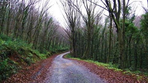 Fatih Ormanı'nda Yapılaşmaya Dur Eylemi