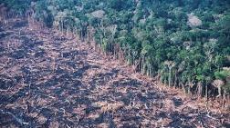 Amazonları Kemiren Çete Deşifre Oldu