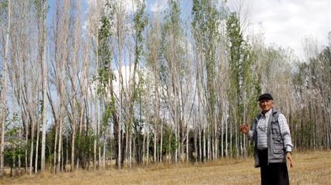 Kuraklıktan 4 Bin Ağaç Kurumak Üzere